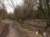 Abattage Peupliers Canal Redressé - Bègles (5)