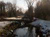 Abattage Peupliers Canal Redressé - Bègles (7)