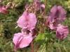 Orchidée Zone humide Berges de Garonne - Bègles