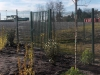 Plantations ZA Calens - Beautiran (2)