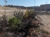 Plantations ZA Calens - Beautiran (3)